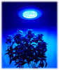 Led Ufo hight Power 90 Watt Grow  Powerlight